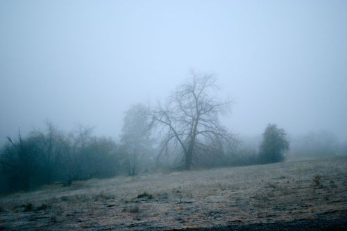 Mule Springs Farm enshrouded in fog and frost.