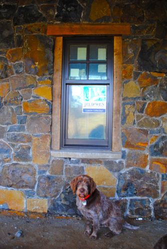 Ouzel showcases the beautiful stone work of the new wall and the old wood surrounding the windows. She can put her paws on the stone window ledge and see what's going on inside the house.