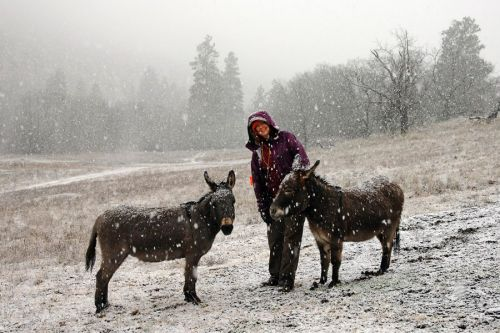 The author with her donkeys, Ziggy and Chippo, in the snow on Christmas Eve.