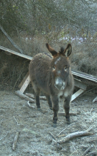 Chippo, the donkey, looks pretty guilty. Has he been after the quail food too?