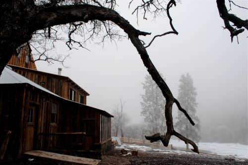 Foggy day in January around the barn at Mule Springs Farm