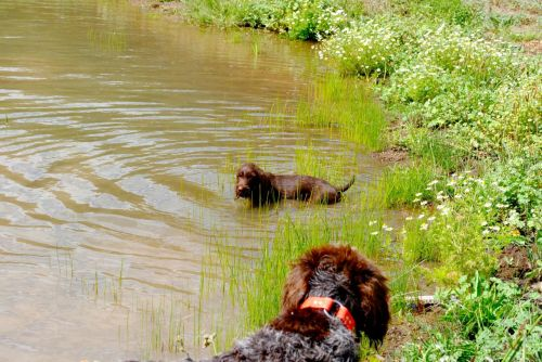 As the Great Oz watches, Gypsy only goes so far into the pond.