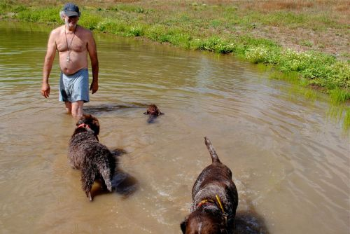 Success!  Gypsy swims with some encouragement from Bruce and the dogs.