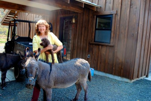 Yee-haw I'm ridin' a donkey! How many pudelpointers get to this!
