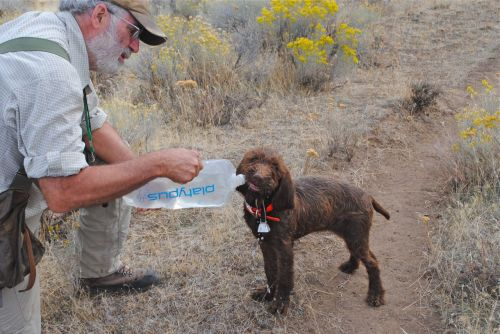 Teaching Gypsy how to drink from a bladder while she is hunting in the desert.
