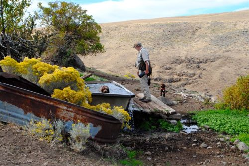 The dogs find a cattle watering trough while hunting in Eastern Oregon.