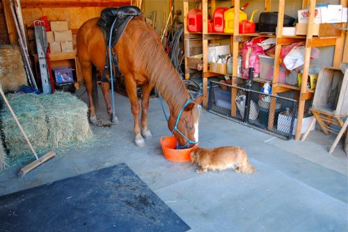 Lorie's horse Whisper and Twinkie, his little buddy.