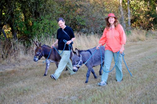 Our first walk with Ziggy and Chippo  in 2011 at Crown Meadow Farms in Scio, Oregon.