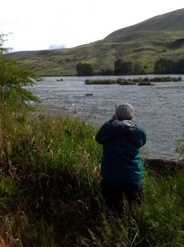 Deschutes River--spying a Common Merganser.