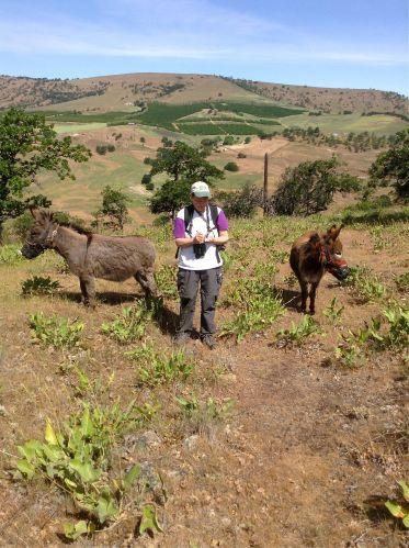 Heidi notes a Western Bluebird on Razorback Ridge.