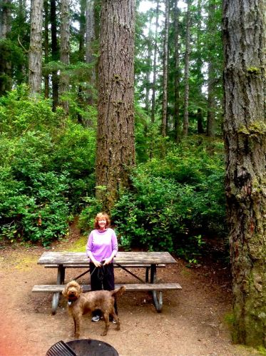 Sher and Gypsy under the towering old growth at Jessie M. Honeyman Memorial State Park Oregon Coast.