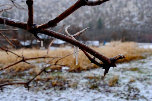 This morning's ice drip.